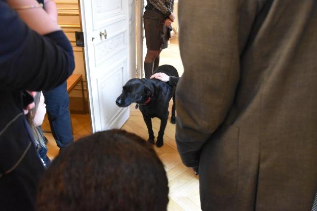 Elysée - Némo, chien du président de la République